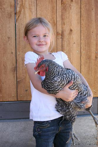 Gallery Image Chickens_for_mom_006.jpg