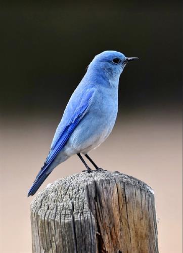 Local Bird Walks