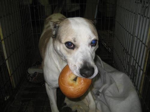 Gallery Image DOG_WITH_BAGEL.jpg