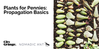 Plants for Pennies: Propagation for Beginners