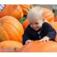 Chicago Fall Fun - Fall Events and Activities