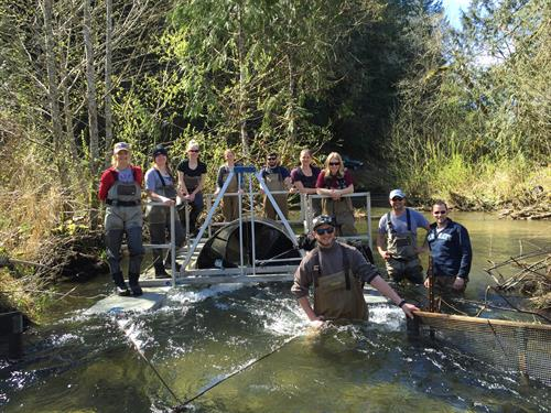 Volunteers and interns are essential for our research programs, including the Hood Canal Steelhead Project.