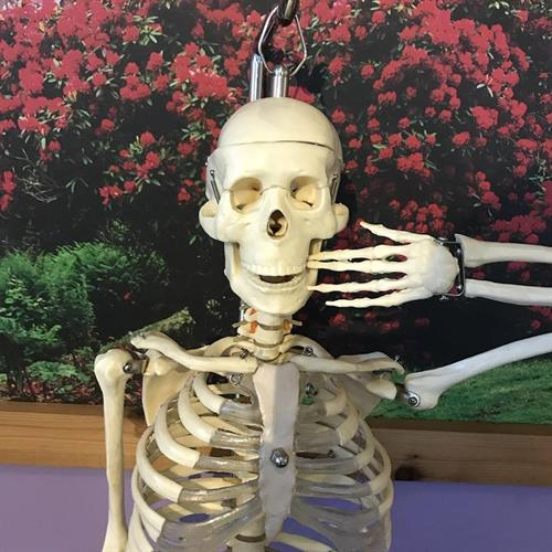 Gallery Image skeleton.jpg