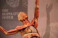 Science Center Announces Fall Blockbuster Exhibit: Real Bodies