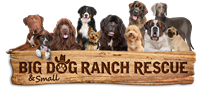 Big Dog Ranch Rescue Young Professionals Kick-Off Howloween Event
