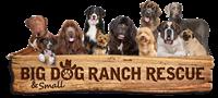 Schumacher Subaru Adoption Event for Big Dog Ranch Rescue