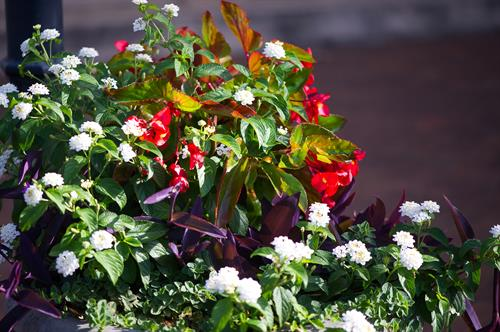 Flowers line the entrance to the Perry Area Convention & Visitors Bureau/Perry Welcome Center.