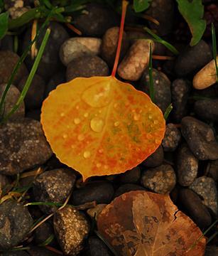 Gallery Image leaf.jpg