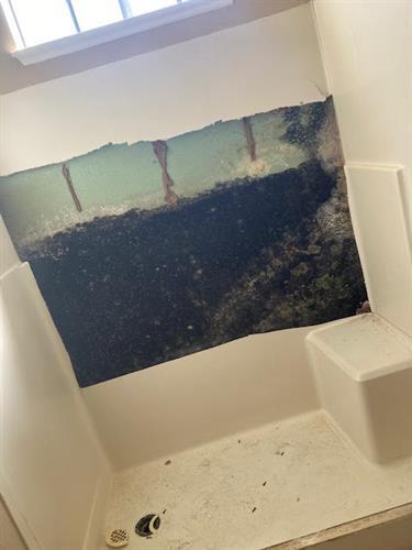 Gallery Image mold_behind_shower_panel.jpg