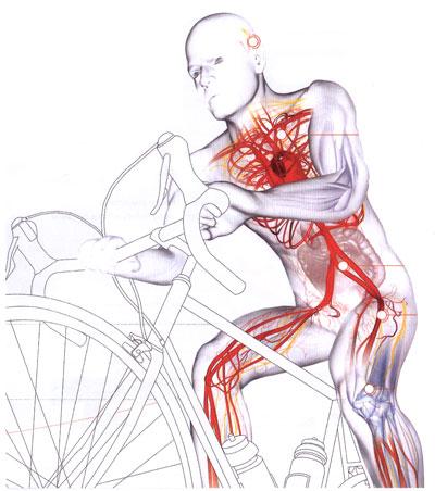 Increased circulation improves cardiac activity