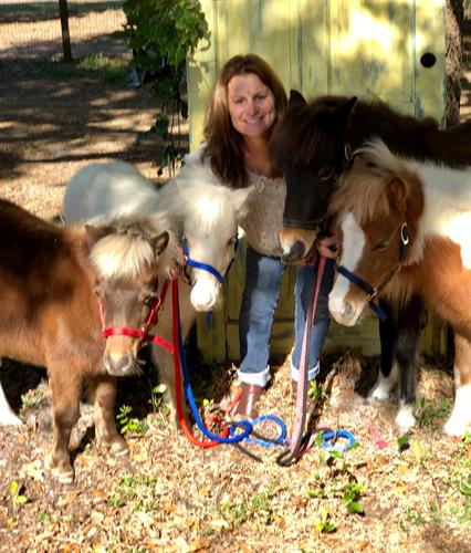 Miniature Therapy Horses Ellie, Hawkeye, Mariah, and Shelton with Susan Nastasi, proprietor