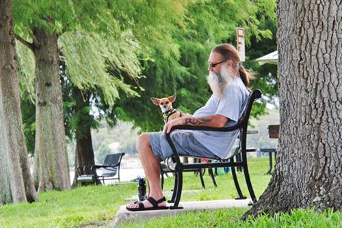 Man's best friend enjoys beautiful Lakeshore Drive