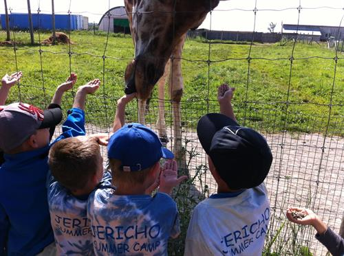 Summer Camp trip - Elmvale Zoo