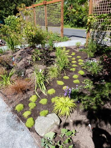 Entry garden - Edmonds, WA