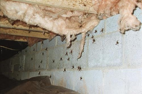 Crawl space insects.