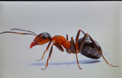 one of a thousand ants.
