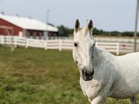Par For the Horse Event