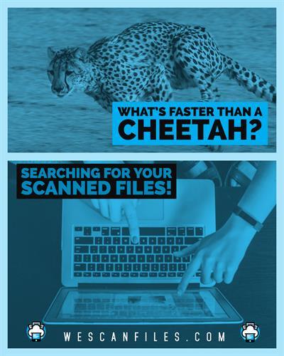 Gallery Image Cheetah.jpg
