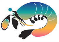 Mantis Shrimp Consulting