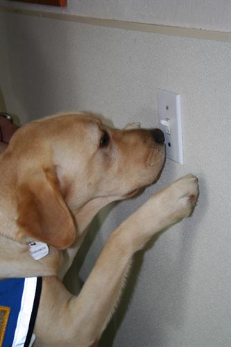 Dog activating a light switch
