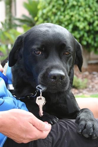 Dog retrieving keys
