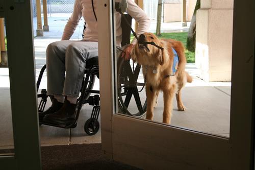 Dog opening doors