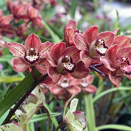 Flowers Balboa Park