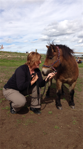Sandy & mini Teddy training in Canada for Equine Facilitated Wellness Program.