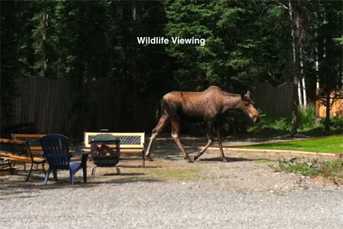 wildlife make periodic visits around the lodge