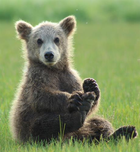 Gallery Image Baby_Bear_holding_foot_cropped(1).jpg