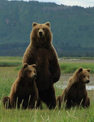 Gallery Image Standing_with_two_cubs_cropped_small.jpg