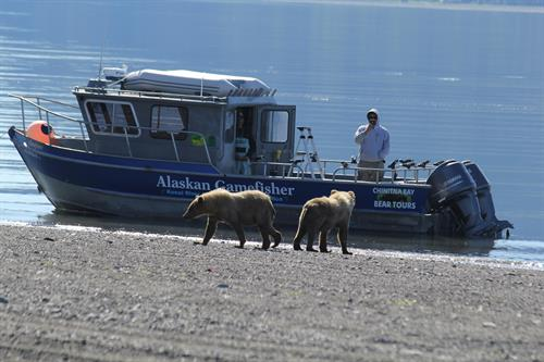Bear Viewing Lake Clark National Park