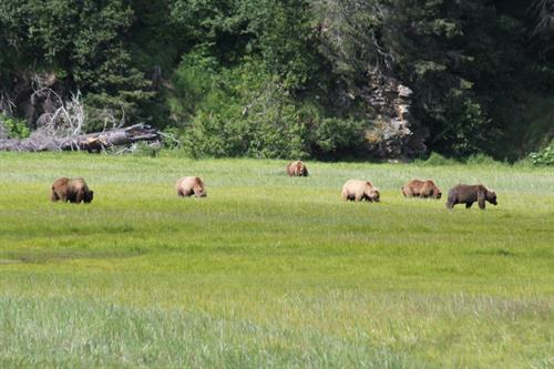 bears in meadow