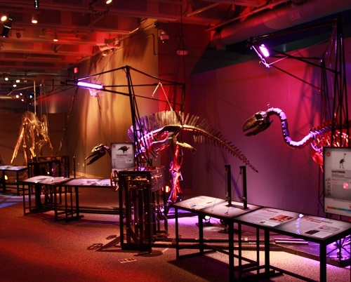 Dinosaurs in Motion exhibit