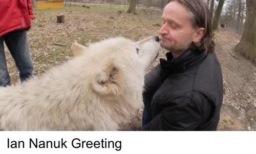 Ian greeting Nanuk at our Wolf Talking 8 Hour Coaching Session in Vienna Austria  www.CoachingCrossroads.com/meet-the-team