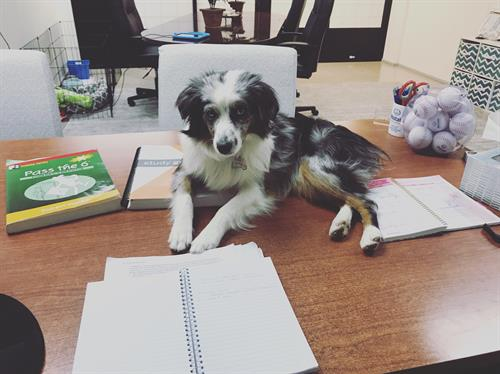 Our office pup Mayhem works hard!
