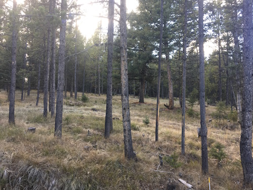 A beautifully, thinned forest a few years after work was completed