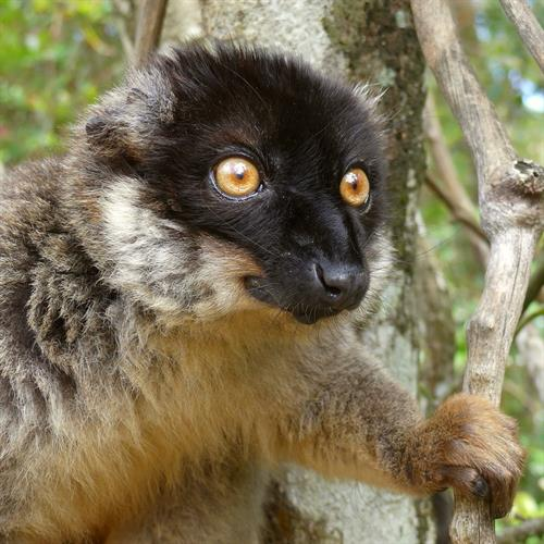 Madagascar is a continent apart from anywhere else in Africa.