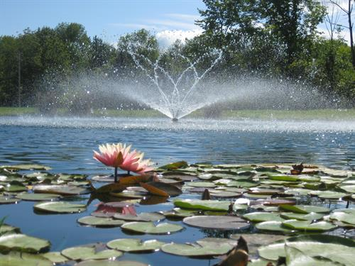 Gallery Image AD_pond-Fountain_with_lily.jpg