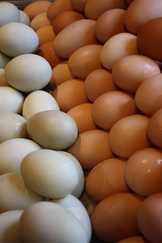Harvest Bell pasture-raised eggs.