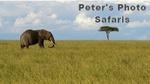 Peter's Wildlife Safaris