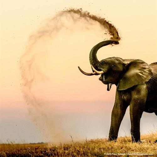 Gallery Image Dustbathing_Elephant-6512.jpg