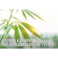 Brunch & Learn: The endocannabinoid System