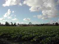 Arroyo Grande Agriculture