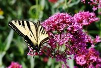 Gallery Image Butterfly.jpg