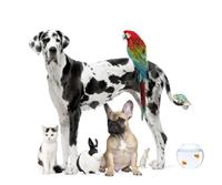 Davies & Glenn can manage your pet trust.  You would be amazed at how many animals already have a trust in place!