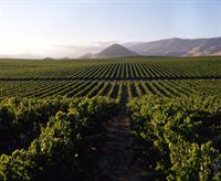 Our Estate Vineyards