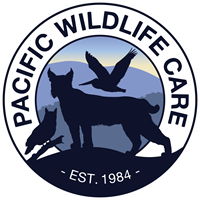 New Logo Unveiled for Pacific Wildlife Care