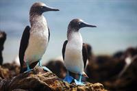 Coffee Talk: The Galapagos Islands & Expedition Cruising
