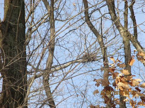 This Coopers Hawk nest had not been seen at the Nature Park until the area was cleared of invasives by the Ancient Oaks volunteers